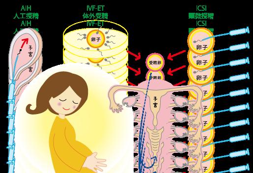 不妊治療 ~AIH・IVF-ET・ICSI~☆もも木薬局