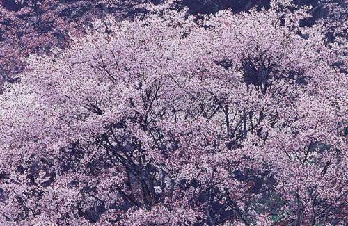 春のストレス☆もも木薬局